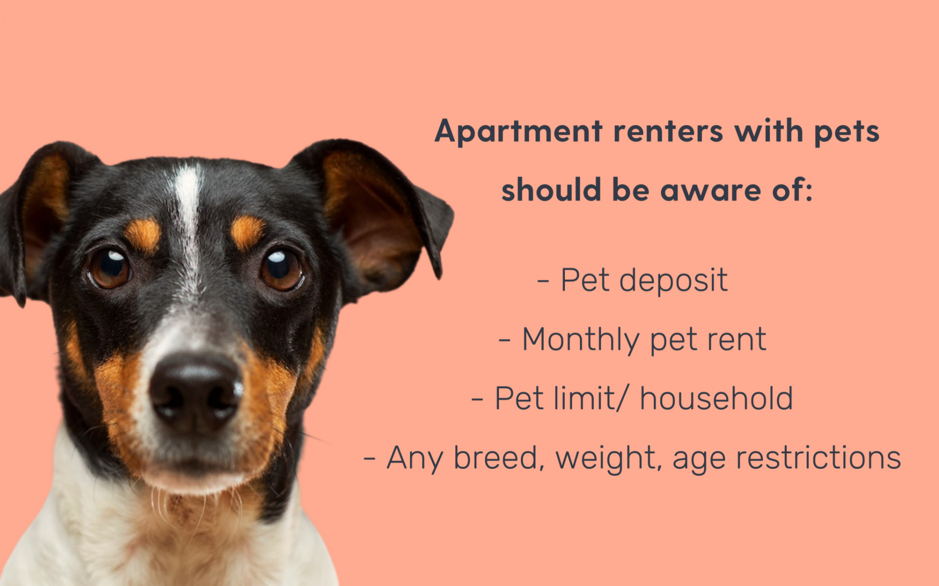things ot know about renting with a pet